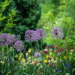Stock photo of flowers in a garden.